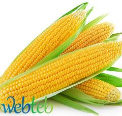 اكلات خفيفه corn.jpg